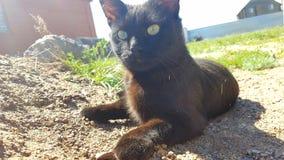 Black cat. On the garden stock photo