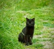 Black cat Stock Photos