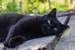 Black cat in the garden. In the sunset, on summer stock images