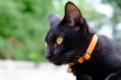 Black cat in the garden. The cute black cat in the garden with green field background royalty free stock photo