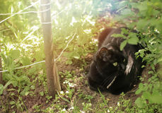 Black cat  in a garden Stock Images
