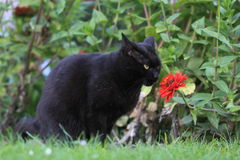 Black cat in garden Stock Images