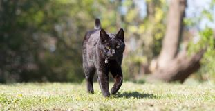 Black cat in the garden. Sunny day, selective focus royalty free stock images