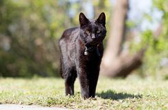 Black cat in the garden. Sunny day, selective focus stock image