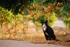 Black cat in garden. This is thai black cat in garden Stock Photography