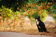 Black cat in garden. This is thai black cat in garden Stock Photos