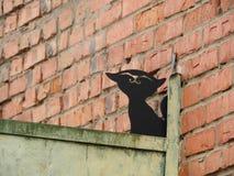 Black cat on the gate. Metal art royalty free stock photos
