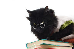 Black cat with glasses Stock Photos