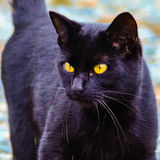 Black cat with glowing  eyes Stock Photo