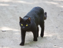 The black cat goes along the road Royalty Free Stock Image