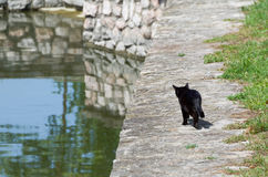 Black Cat Goes Fishing Stock Photos
