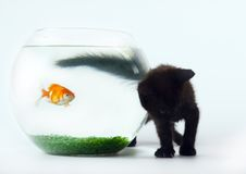 Black cat & Gold fish. Cat - the small furry animal with four legs and a tail; people often keep cats as pets Stock Images