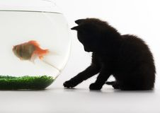 Black cat & Gold fish. Cat - the small furry animal with four legs and a tail; people often keep cats as pets Stock Photo