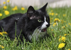 Black cat on the grass Stock Image
