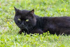 Black Cat On Grass. With matching green eyes stock photos
