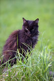 Black cat in grass Stock Photos