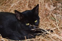 Black cat on grass Royalty Free Stock Photo