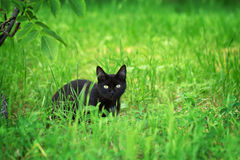 Black cat in the grass Stock Photos