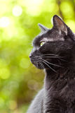 Black cat on a green background. A black cat on a green background Royalty Free Stock Photography