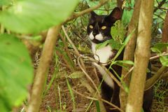 Black cat in the green bushes in the Park. View Royalty Free Stock Photos