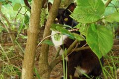 Black cat in the green bushes in the Park. View Stock Image