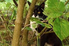 Black cat in the green bushes in the Park. View Stock Images