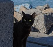 Black cat green eyed watching you. Black cat watching you with its green eyes. It is in the beach Royalty Free Stock Images