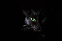 Black cat with green eyes Stock Photography