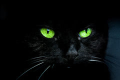 Black Cat with green eyes royalty free stock photography