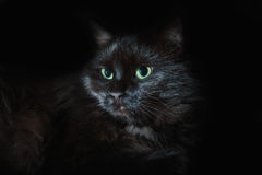 Black cat with green eyes stock photos