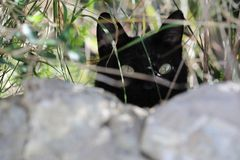 Blurred background. A black cat hidding in the garden stock photo