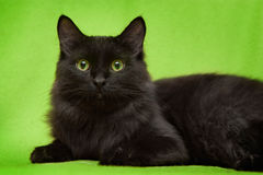 Black cat with green eyes lying on blanket. Beautiful black cat with green eyes lying on green blanket royalty free stock image