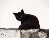 Black cat with green eyes watching Stock Photo