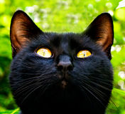 Black cat in garden Stock Photo