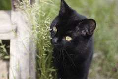 Black cat in the green grass Stock Image