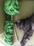 Black cat on a green sofa next to knitting and knitting royalty free stock images