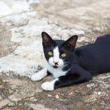 Black Cat. A Black Cat on ground stock image