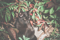 Black Cat on the Ground Royalty Free Stock Photography