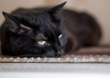 Black cat with half-closed eyes lies on a mat, selected focus. Pets, animals, day of the black cat, november, magic, witchcraft and home concept royalty free stock photos