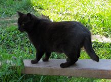 Black Cat with Half Tail on Farm. 20100410. Black cat with half tail on cart handle which is in the grass, partial shade, farmland. Harford County, MD, USA stock images