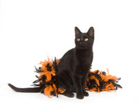 Black cat and Halloween Stock Photo