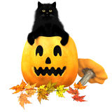 Black Cat Halloween Autumn Leaves Royalty Free Stock Photo
