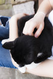 Black cat in hands. Hands and black cat pet Stock Images