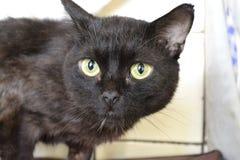 Black cat. The head of black cat Stock Images