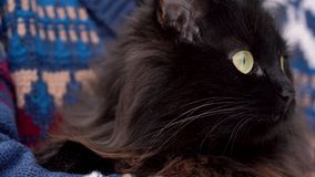 Black cat is held on its hands outdoors in the winter, with snowflakes on its fur stock footage