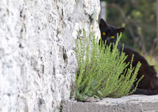 Black cat hidind Royalty Free Stock Photography