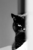 Black Cat Hiding and Staring in Black & White. A monochrome image of an attractive black cat staring with one eye from behind a white banister, looking down Royalty Free Stock Photos