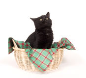 Black cat in a holiday basket Stock Photos