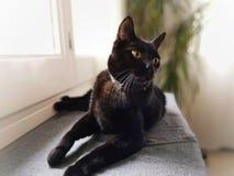 BlAck cat. At home stock image