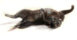 BlAck cat. At home stock photography